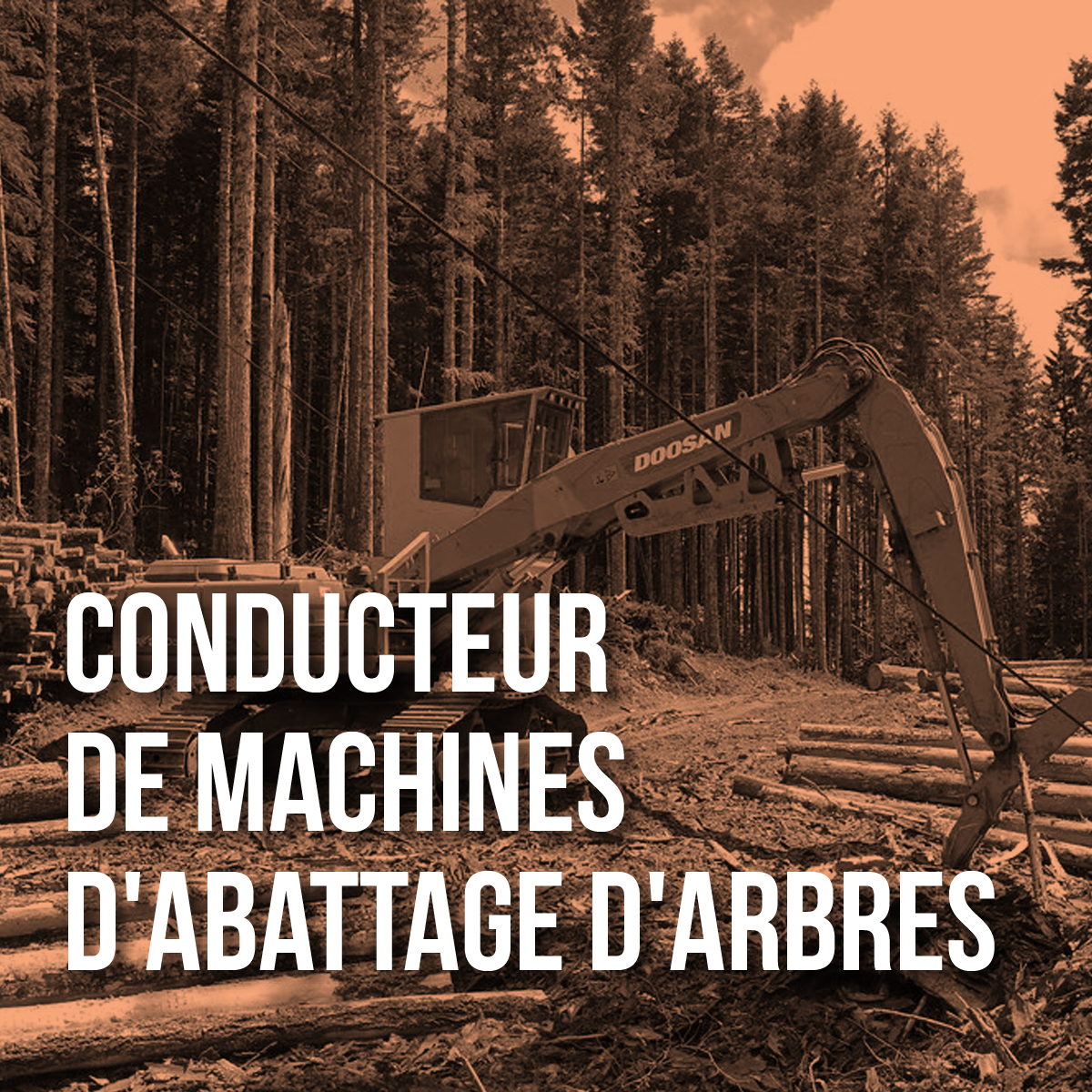 conduc_machine_Arbre