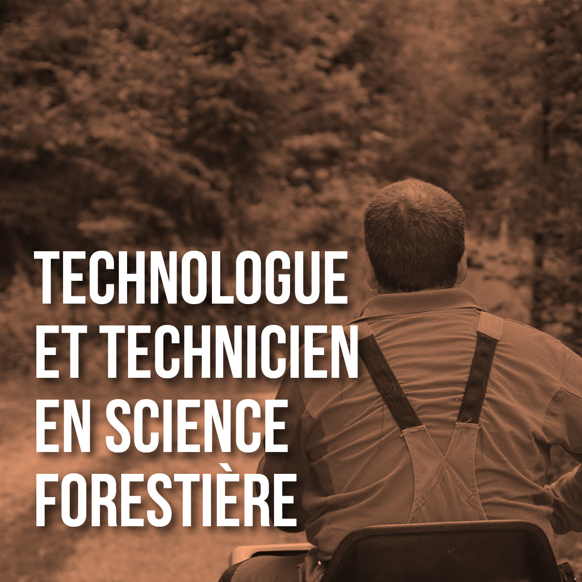 science_forest